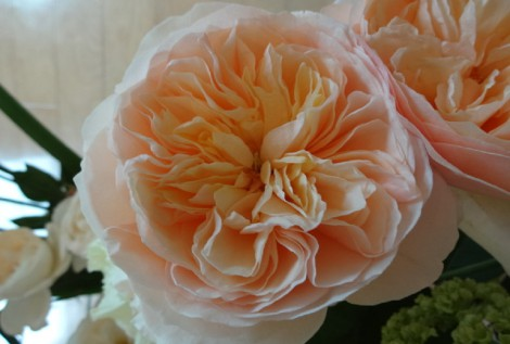 美しい大輪咲きバラ「ジュリエット」